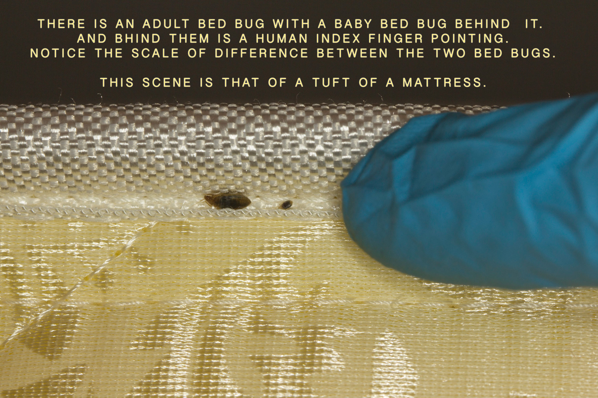 Oakville Bed Bugs Pictorial 1